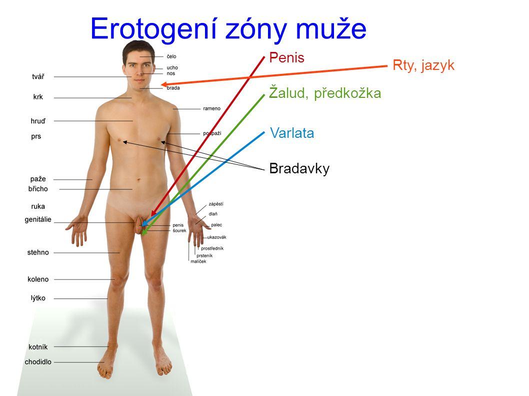 Erotogení zóny muže Penis Žalud, předkožka Varlata Bradavky Rty, jazyk