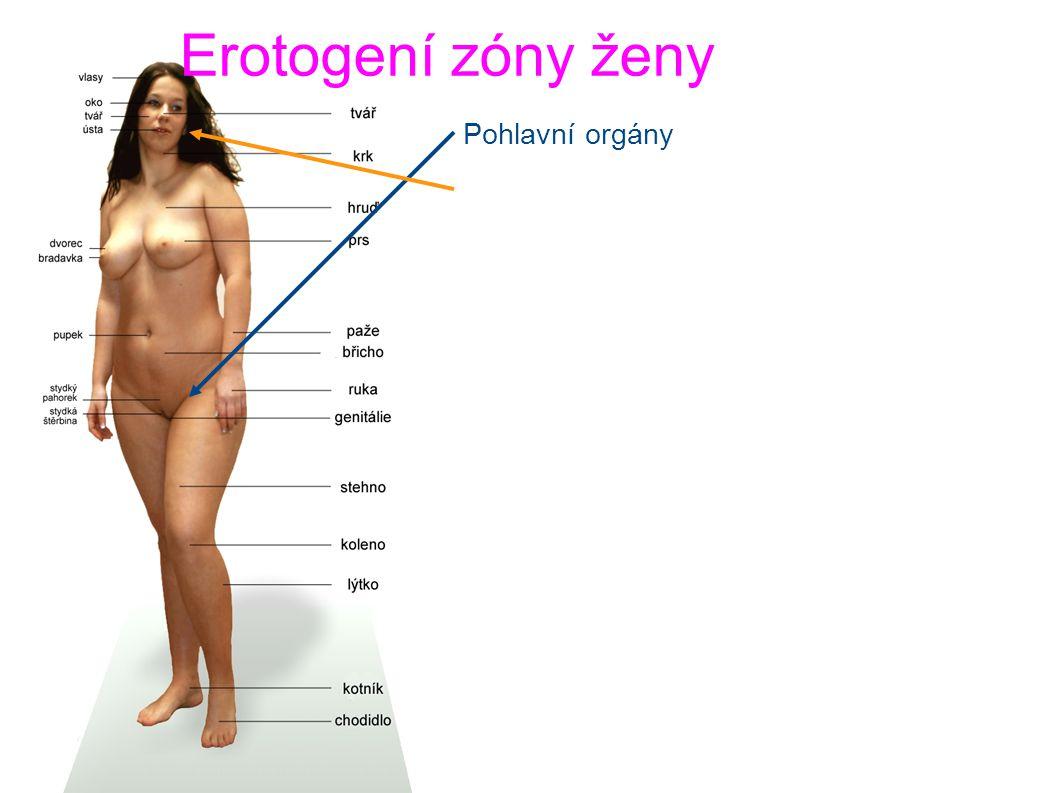 Erotogení zóny ženy Pohlavní orgány Uši, ušní lalůčky