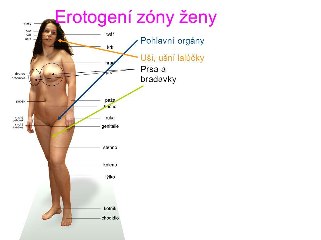 Erotogení zóny ženy Pohlavní orgány Uši, ušní lalůčky Prsa a bradavky Vnitřní část stehen
