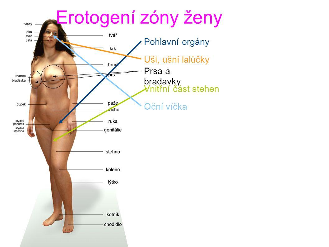 Erotogení zóny ženy Pohlavní orgány Uši, ušní lalůčky Prsa a bradavky Vnitřní část stehen Oční víčka