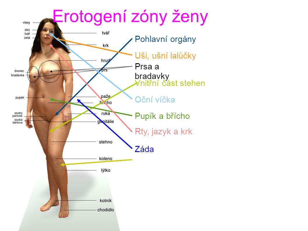 Erotogení zóny ženy Pohlavní orgány Uši, ušní lalůčky Prsa a bradavky Vnitřní část stehen Oční víčka Pupík a břícho Rty, jazyk a krk Záda Podkolení jamky