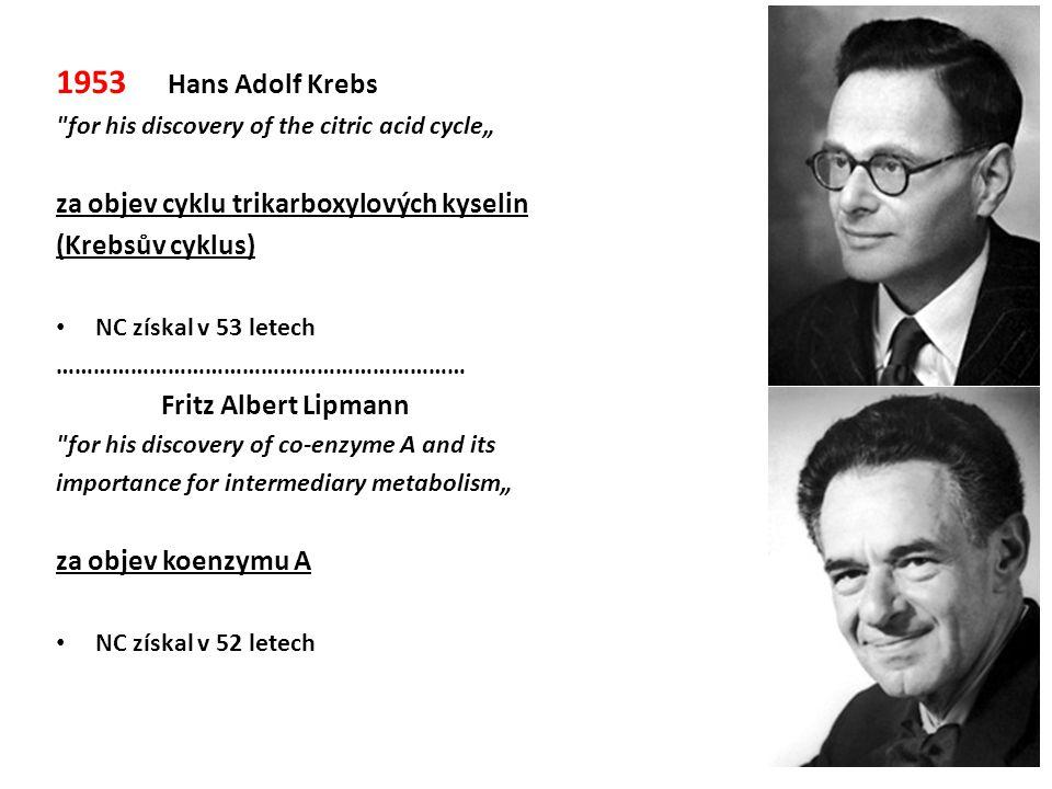 1953 Hans Adolf Krebs