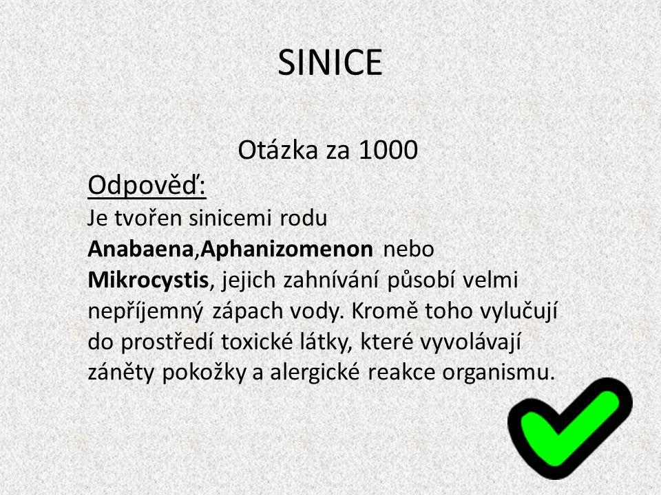 SINICE Otázka za 1000 Odpověď: Je tvořen sinicemi rodu Anabaena,Aphanizomenon nebo Mikrocystis, jejich zahnívání působí velmi nepříjemný zápach vody.