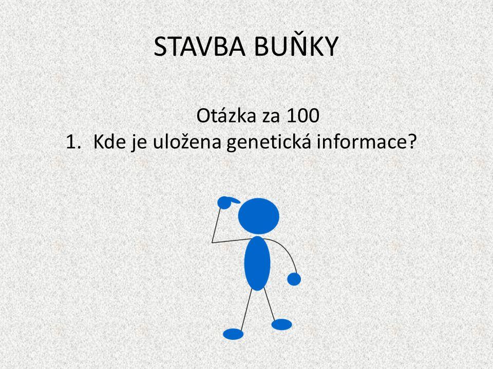 STAVBA BUŇKY Otázka za 100 1.Kde je uložena genetická informace?