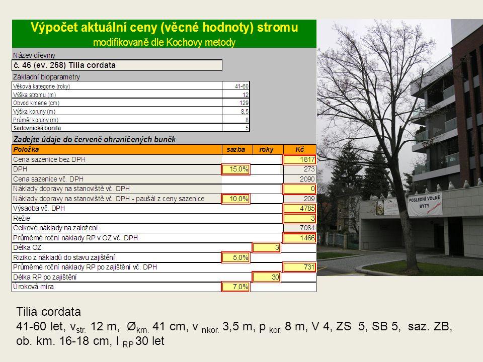 Tilia cordata 41-60 let, v str. 12 m, Ø km. 41 cm, v nkor. 3,5 m, p kor. 8 m, V 4, ZS 5, SB 5, saz. ZB, ob. km. 16-18 cm, l RP 30 let