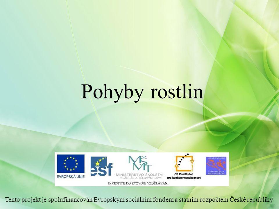 Pohyby rostlin Tento projekt je spolufinancován Evropským sociálním fondem a státním rozpočtem České republiky