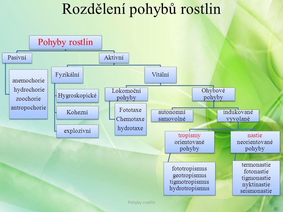 Rozdělení pohybů rostlin Pohyby rostlin