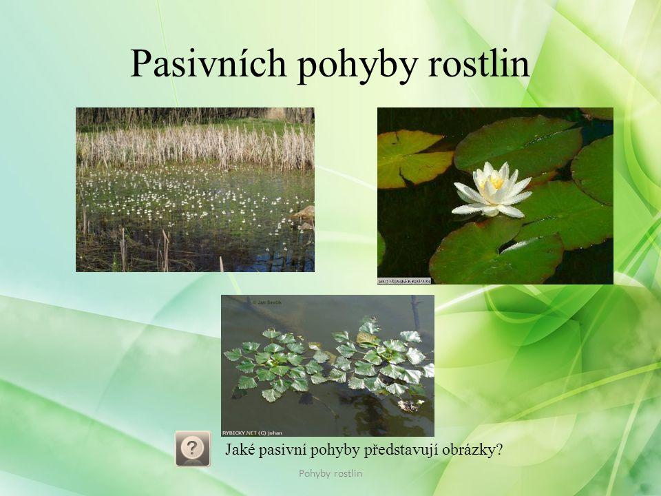 Pasivních pohyby rostlin Pohyby rostlin Jaké pasivní pohyby představují obrázky?