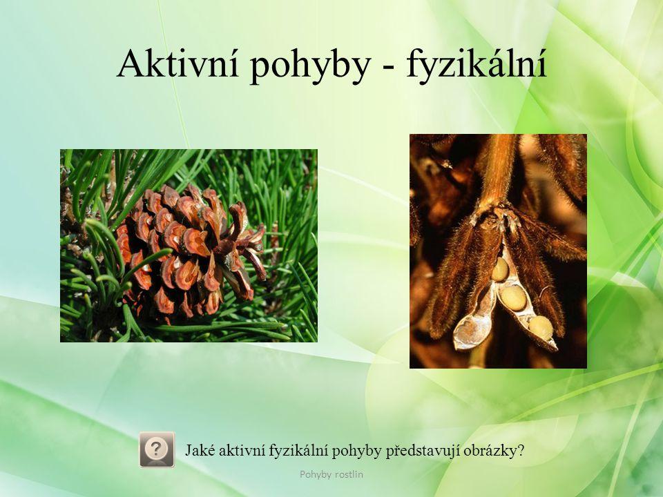 Aktivní pohyby - fyzikální Pohyby rostlin Jaké aktivní fyzikální pohyby představují obrázky?