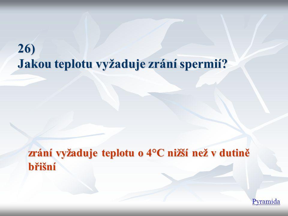 26) Jakou teplotu vyžaduje zrání spermií? zrání vyžaduje teplotu o 4°C nižší než v dutině břišní Pyramida