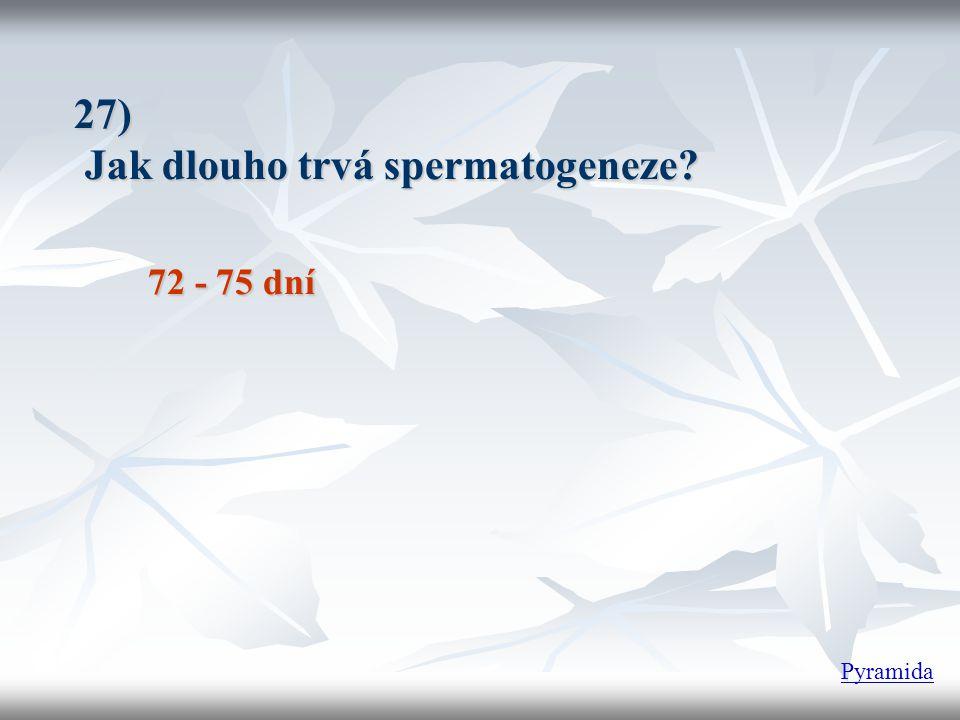27) Jak dlouho trvá spermatogeneze? 72 - 75 dní Pyramida