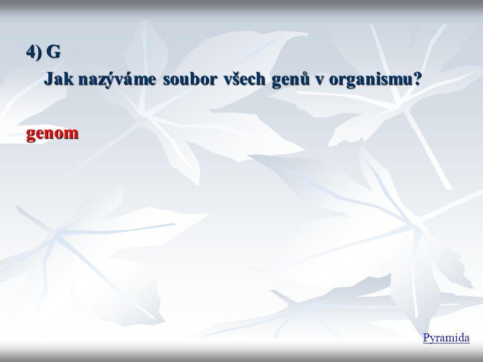 23 25) Kolik chromozomů je v každé spermii? Pyramida
