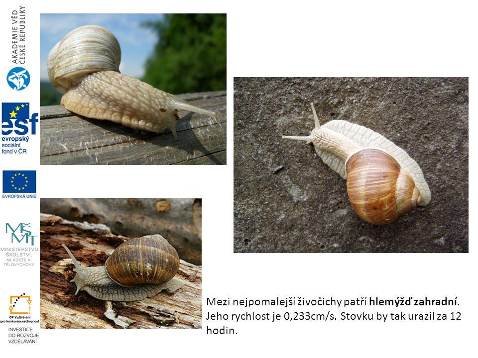 Mezi nejpomalejší živočichy patří hlemýžď zahradní. Jeho rychlost je 0,233cm/s. Stovku by tak urazil za 12 hodin.