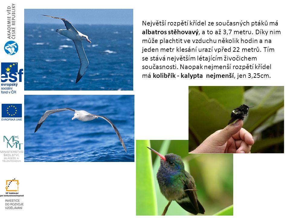 Největší rozpětí křídel ze současných ptáků má albatros stěhovavý, a to až 3,7 metru. Díky nim může plachtit ve vzduchu několik hodin a na jeden metr