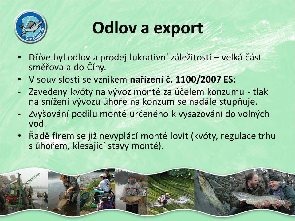 Odlov a export • Dříve byl odlov a prodej lukrativní záležitostí – velká část směřovala do Číny. • V souvislosti se vznikem nařízení č. 1100/2007 ES: