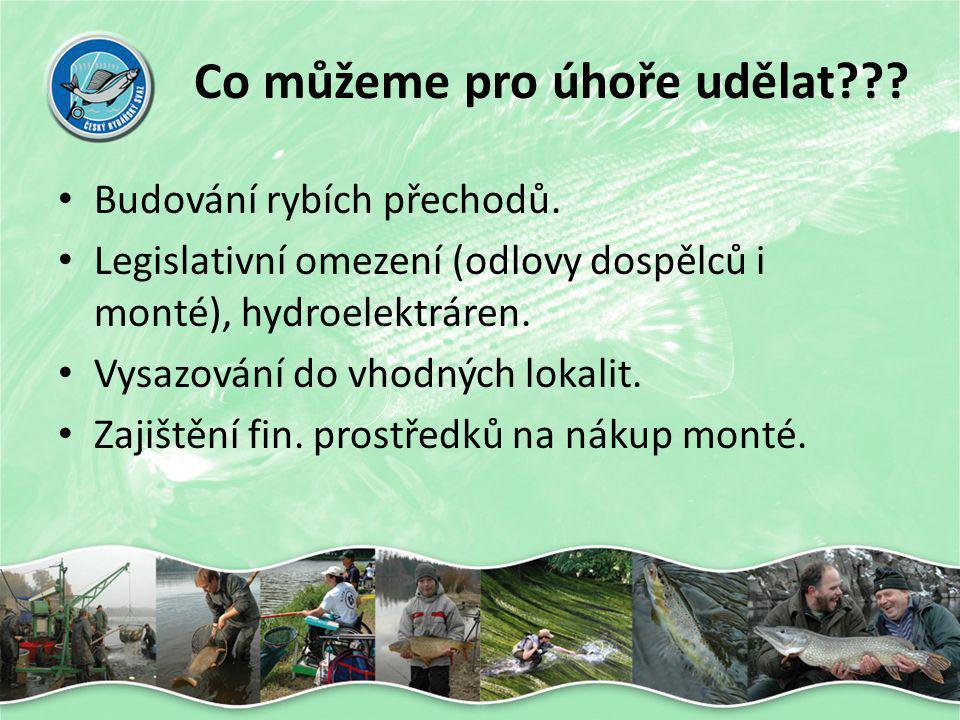 Co můžeme pro úhoře udělat??? • Budování rybích přechodů. • Legislativní omezení (odlovy dospělců i monté), hydroelektráren. • Vysazování do vhodných