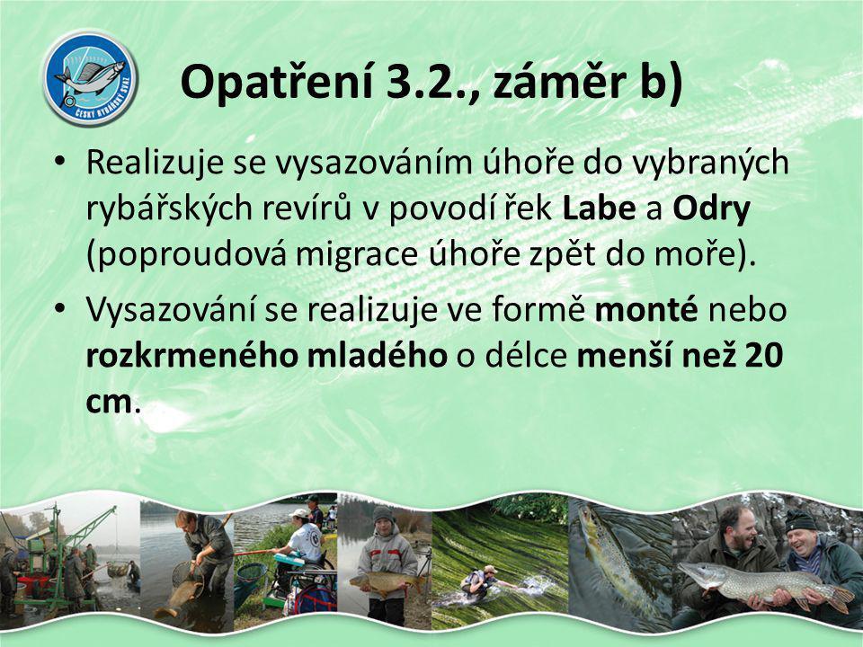 Opatření 3.2., záměr b) • Realizuje se vysazováním úhoře do vybraných rybářských revírů v povodí řek Labe a Odry (poproudová migrace úhoře zpět do moř
