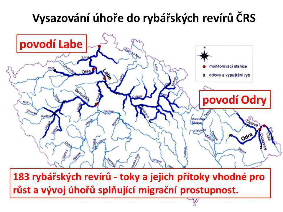 Vysazování úhoře do rybářských revírů ČRS povodí Odry povodí Labe 183 rybářských revírů - toky a jejich přítoky vhodné pro růst a vývoj úhořů splňujíc