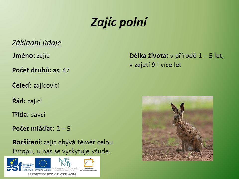 Zajíc polní Základní údaje Jméno: zajíc Počet druhů: asi 47 Čeleď: zajícovití Řád: zajíci Počet mláďat: 2 – 5 Rozšíření: zajíc obývá téměř celou Evrop