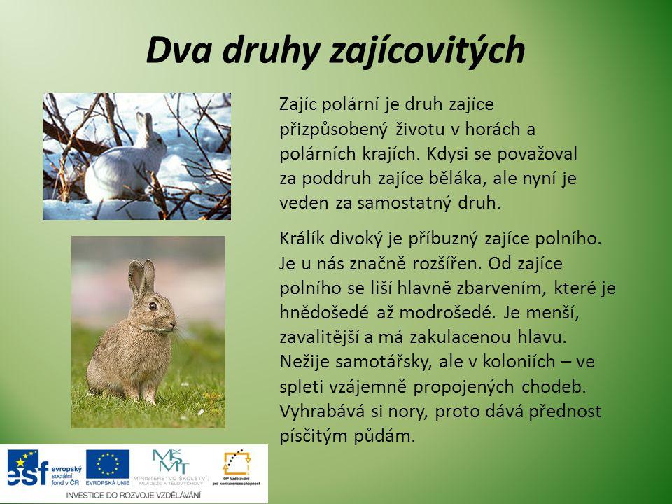 Dva druhy zajícovitých Zajíc polární je druh zajíce přizpůsobený životu v horách a polárních krajích.