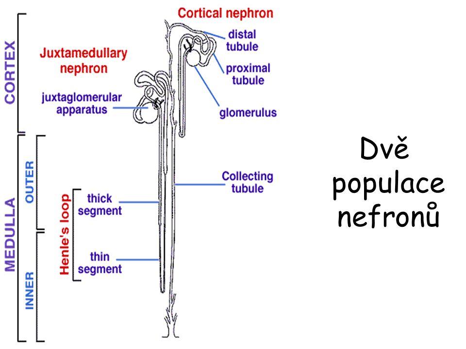 Dvě populace nefronů
