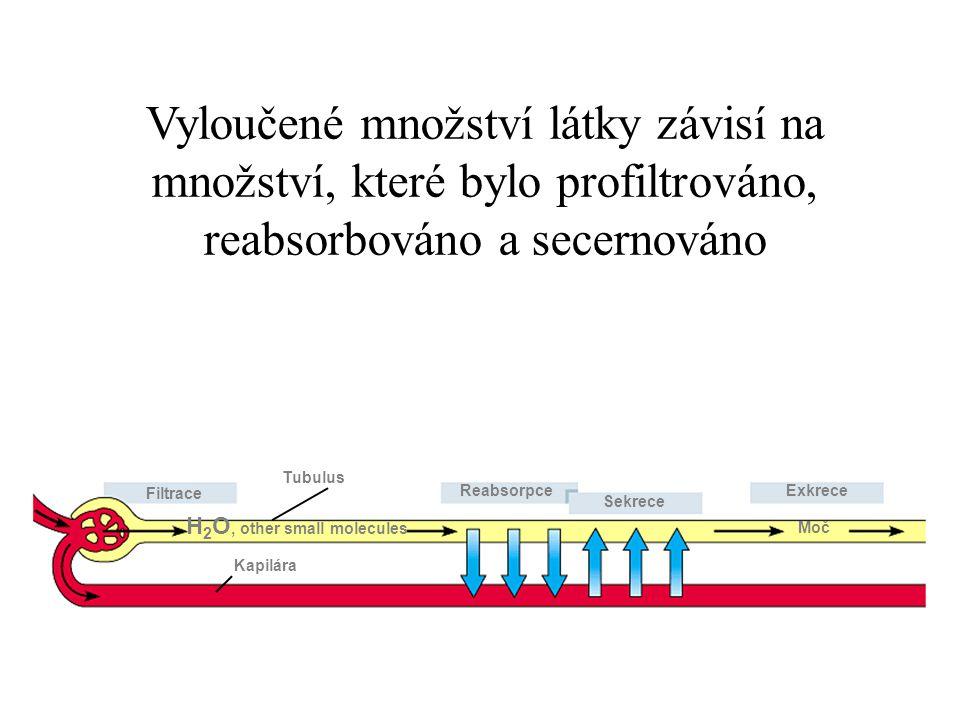 Tubulus Filtrace H 2 O, other small molecules Reabsorpce Sekrece Exkrece Kapilára Moč Vyloučené množství látky závisí na množství, které bylo profiltr