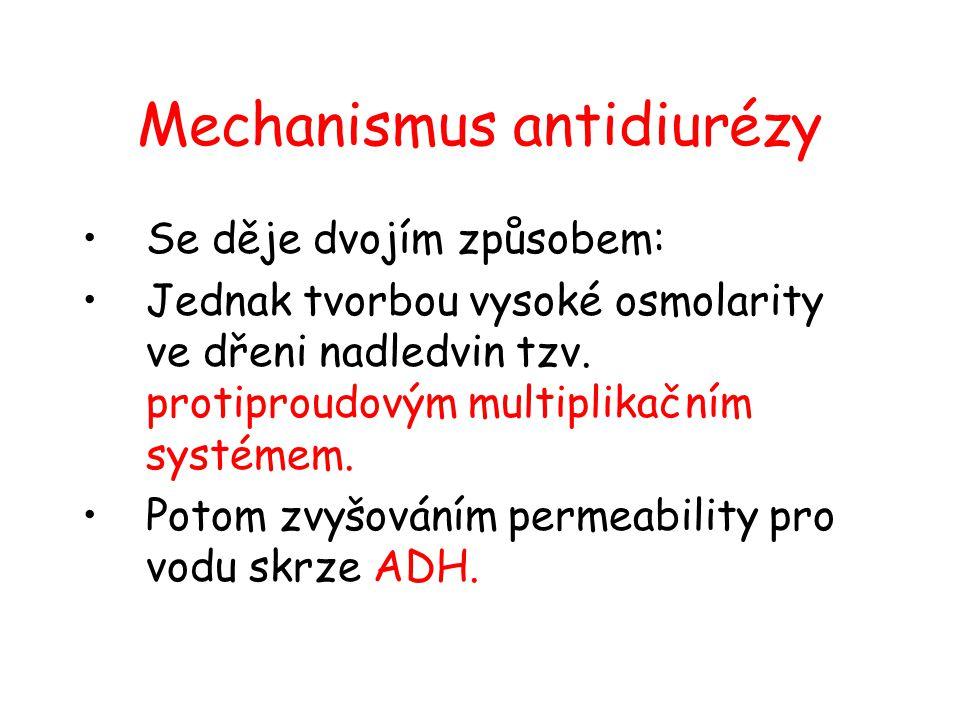 Mechanismus antidiurézy •Se děje dvojím způsobem: •Jednak tvorbou vysoké osmolarity ve dřeni nadledvin tzv. protiproudovým multiplikačním systémem. •P
