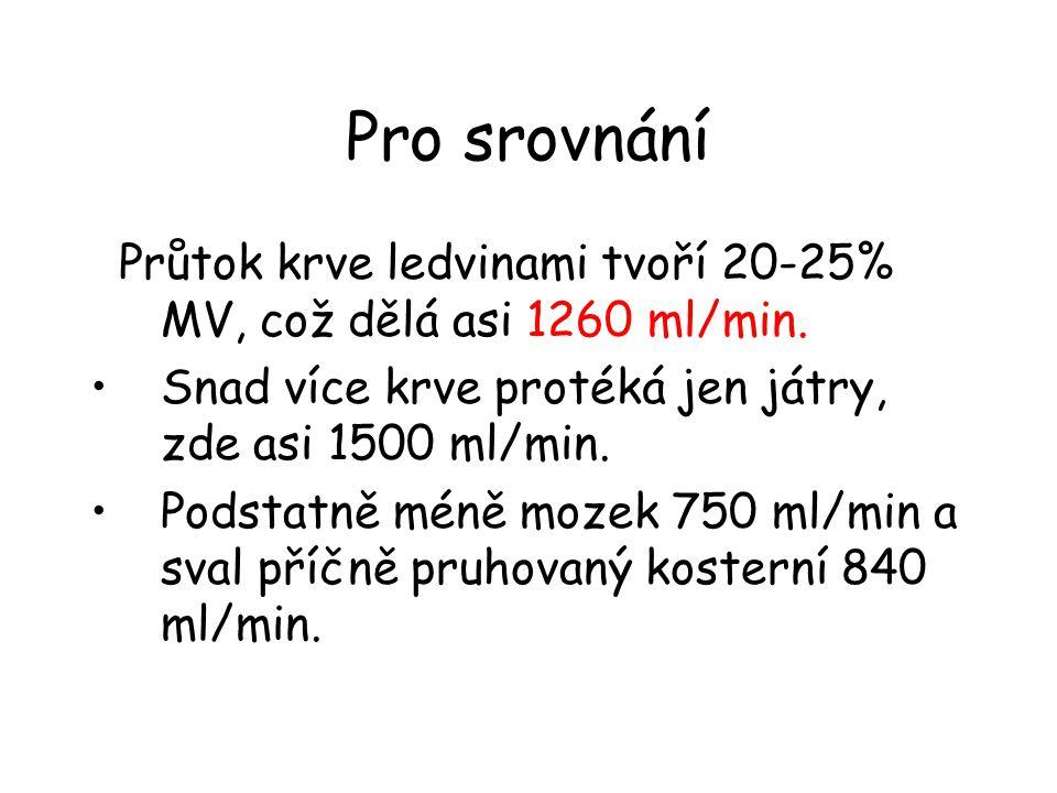 Pro srovnání Průtok krve ledvinami tvoří 20-25% MV, což dělá asi 1260 ml/min. •Snad více krve protéká jen játry, zde asi 1500 ml/min. •Podstatně méně