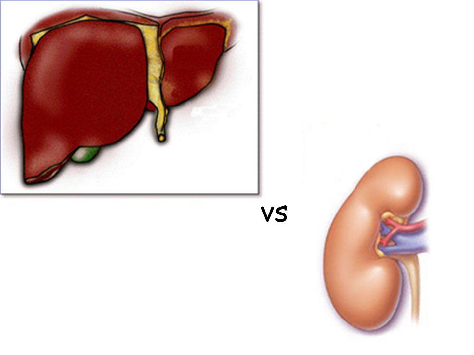 Bowmanův váček Blood Proximální tublus NaCl HCO 3 – H2OH2OGlukóza a aminokyseliny Některé léky a toxické látky NH 3 H+H+ Kůra Dřeň Filtrát H2OH2O NaCl, atd.