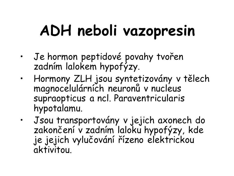 ADH neboli vazopresin •Je hormon peptidové povahy tvořen zadním lalokem hypofýzy. •Hormony ZLH jsou syntetizovány v tělech magnocelulárních neuronů v