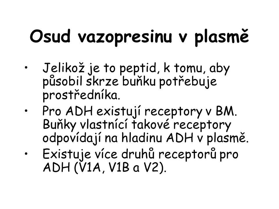Osud vazopresinu v plasmě •Jelikož je to peptid, k tomu, aby působil skrze buňku potřebuje prostředníka. •Pro ADH existují receptory v BM. Buňky vlast