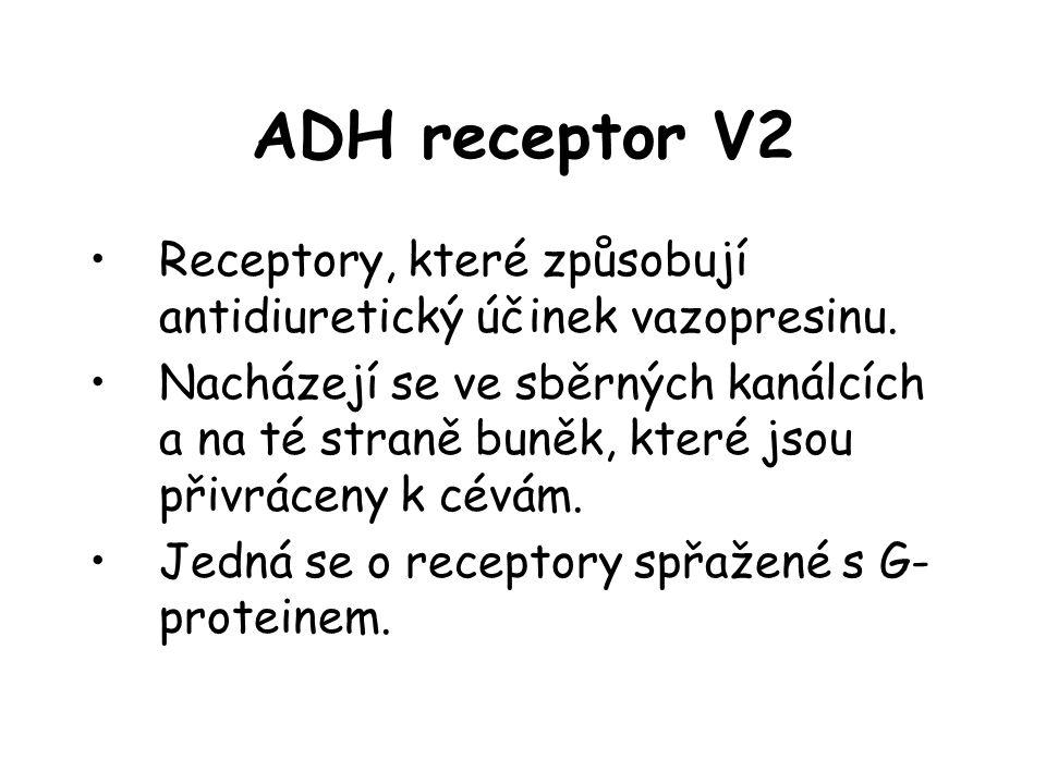 ADH receptor V2 •Receptory, které způsobují antidiuretický účinek vazopresinu. •Nacházejí se ve sběrných kanálcích a na té straně buněk, které jsou př
