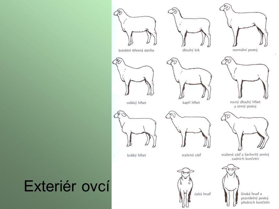 Exteriér ovcí