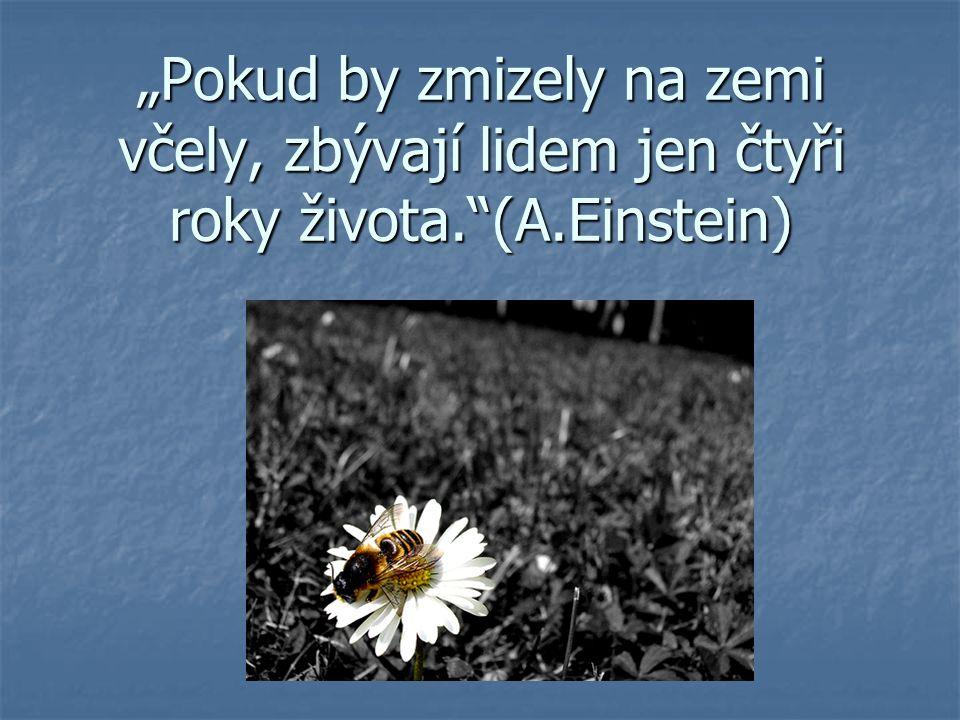 """""""Pokud by zmizely na zemi včely, zbývají lidem jen čtyři roky života.""""(A.Einstein)"""