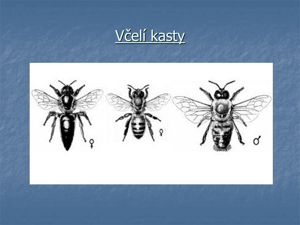 Včelí kasty