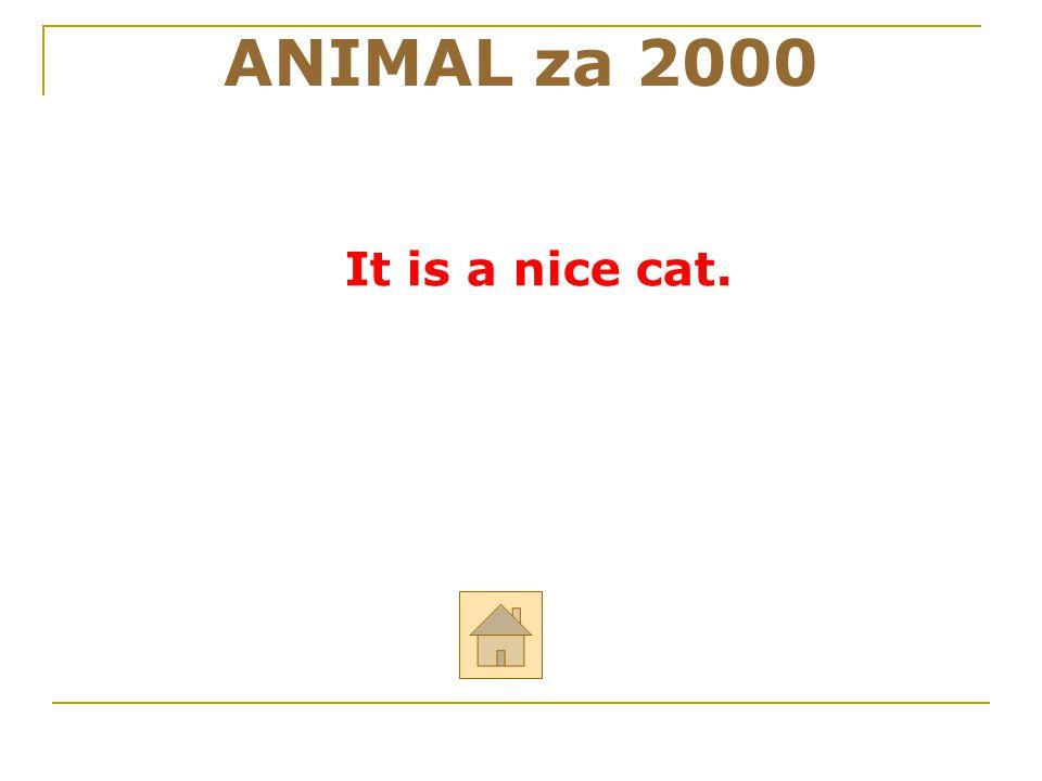 """ANIMAL za 2000 Řekni anglicky: """"To je milá (hezká) kočka."""" ODPOVĚĎ"""