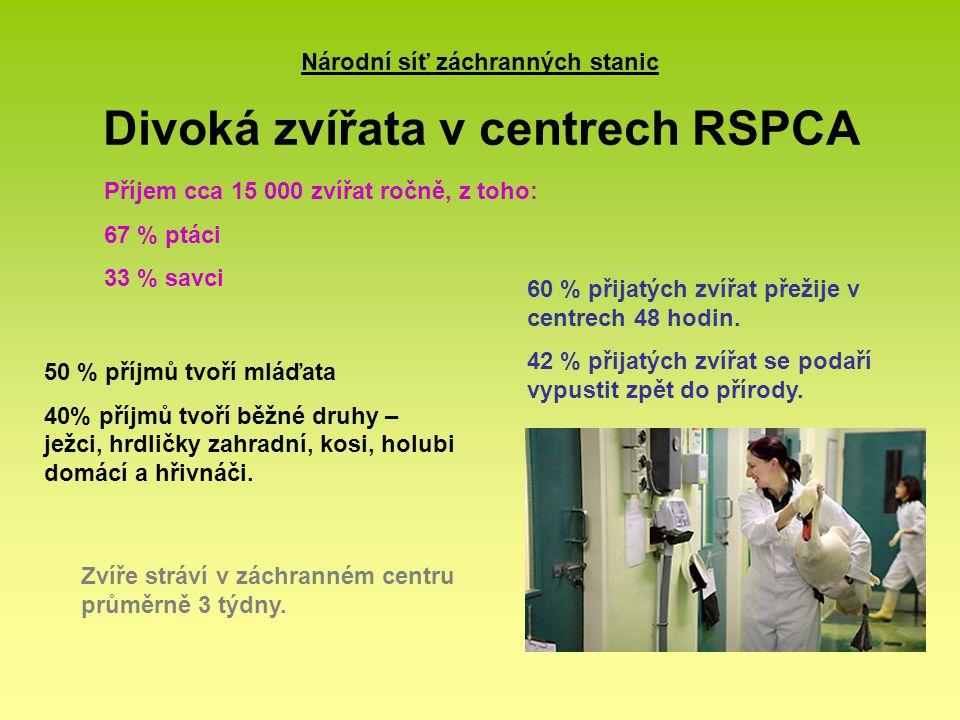 Národní síť záchranných stanic Divoká zvířata v centrech RSPCA Příjem cca 15 000 zvířat ročně, z toho: 67 % ptáci 33 % savci 60 % přijatých zvířat pře