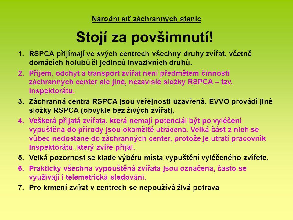 Národní síť záchranných stanic Stojí za povšimnutí! 1.RSPCA přijímají ve svých centrech všechny druhy zvířat, včetně domácích holubů či jedinců invazi