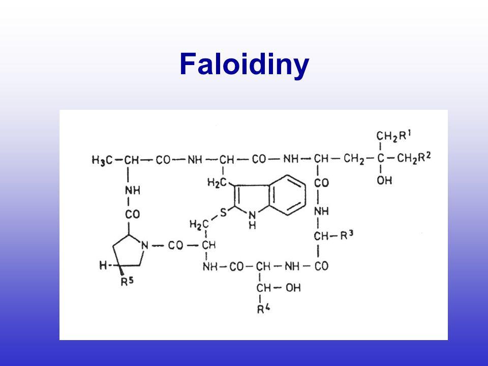 Faloidiny