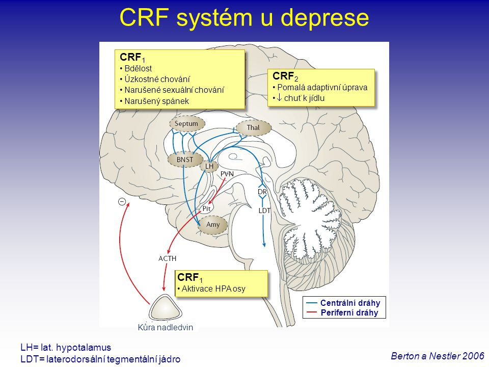 CRF systém u deprese Berton a Nestler 2006 LH= lat. hypotalamus LDT= laterodorsální tegmentální jádro CRF 1 •Bdělost •Úzkostné chování •Narušené sexuá