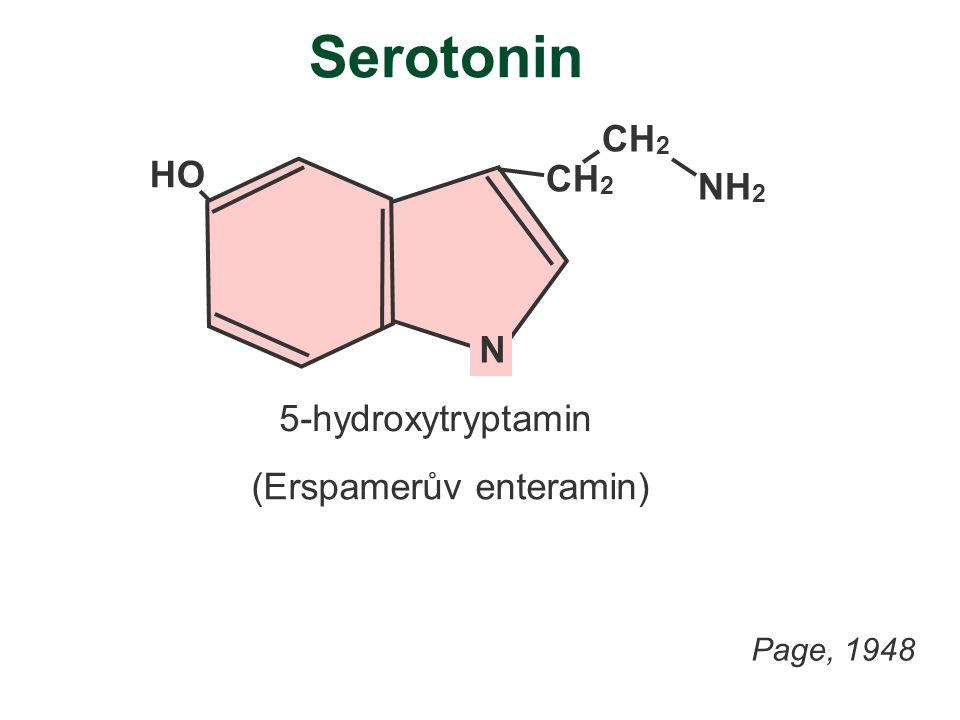 Serotonin HO N CH 2 NH 2 5-hydroxytryptamin (Erspamerův enteramin) Page, 1948
