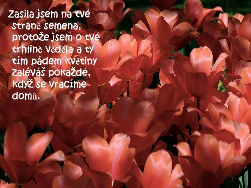 """""""Nevšiml sis, že na tvé stran ě cesty kvetou kv ě ty a na druhé stran ě ne? Stará žena se jen usmála a pravila: """"Nevšiml sis, že na tvé stran ě cesty"""