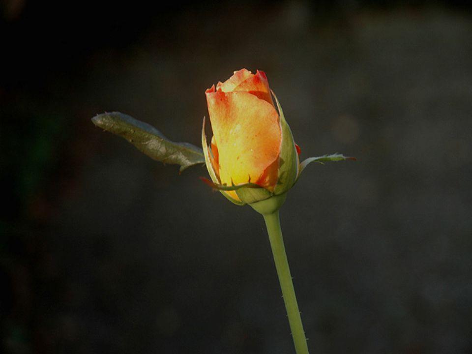 M ě jte krásný den a nezapomínejte vychutnávat v ů ni a krásu kv ě tin na vaší stran ě chodníku. Takže: vy všichni moji p ř átelé s trhlinou ve džbánu