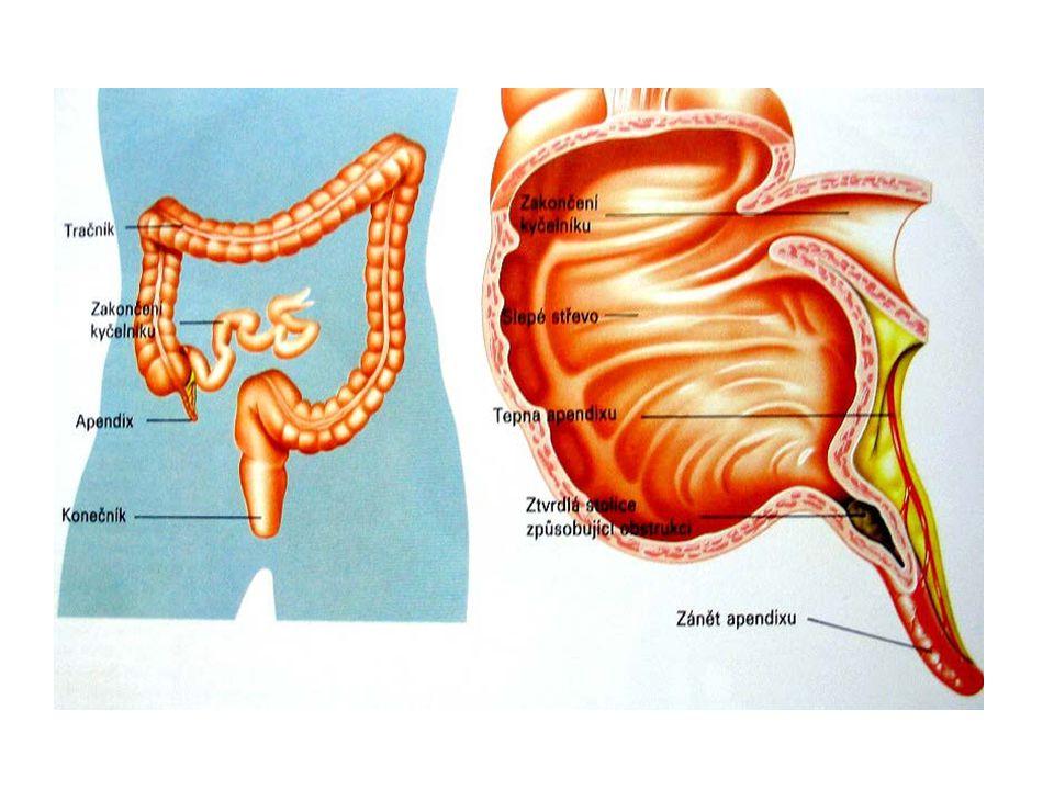 slepé střevo  označuje se jako červovitý výběžek nebo apendix  dlouhý asi 3 – 4 cm tračník  dělí se na tři oddíly :vzestupná část – jde podél pravého obvodu dutiny břišní příčná část – jde zprava do leva sestupná část – vede dolů podél levého obvodu dutiny břišní esovitá klička konečník  je zakončen řitním otvorem