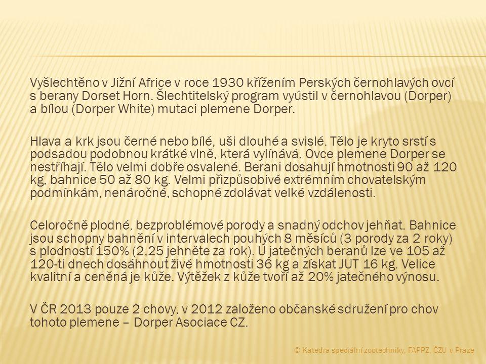 Vyšlechtěno v Jižní Africe v roce 1930 křížením Perských černohlavých ovcí s berany Dorset Horn. Šlechtitelský program vyústil v černohlavou (Dorper)