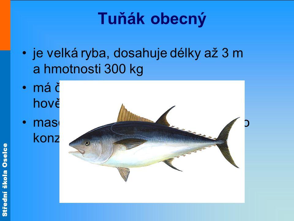 Střední škola Oselce Tuňák obecný •je velká ryba, dosahuje délky až 3 m a hmotnosti 300 kg •má červenou svalovinu podobnou hovězímu masu •maso se zpracovává uzením nebo do konzerv