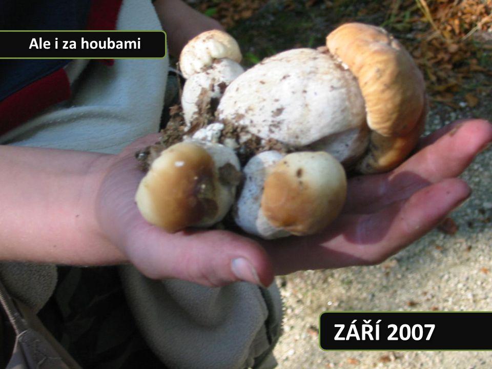 ZÁŘÍ 2007 Ale i za houbami