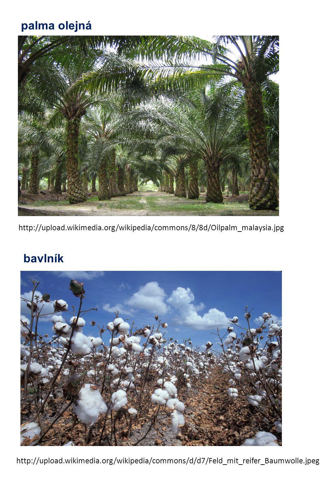 palma olejná http://upload.wikimedia.org/wikipedia/commons/8/8d/Oilpalm_malaysia.jpg bavlník http://upload.wikimedia.org/wikipedia/commons/d/d7/Feld_m