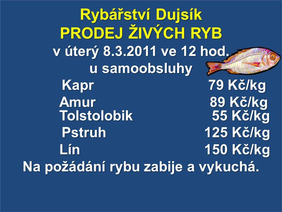 Rybářství Dujsík PRODEJ ŽIVÝCH RYB v úterý 8.3.2011 ve 12 hod. u samoobsluhy Kapr 79 Kč/kg Kapr 79 Kč/kg Amur 89 Kč/kg Tolstolobik 55 Kč/kg Pstruh 125
