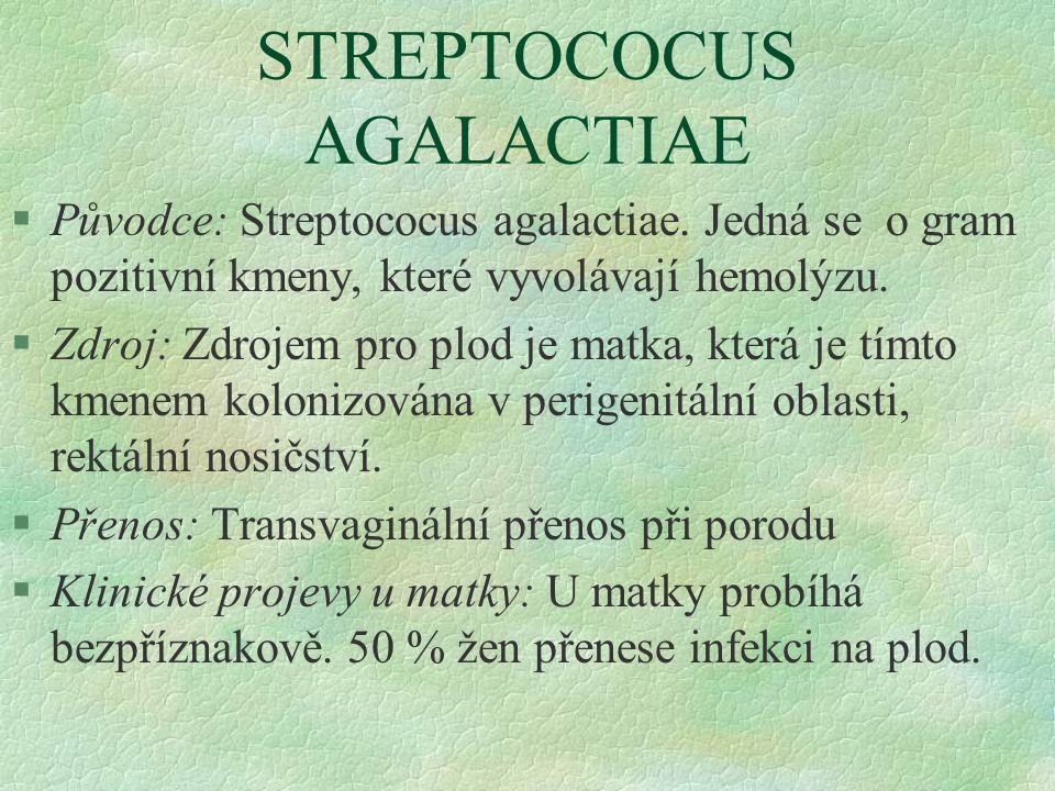 STREPTOCOCUS AGALACTIAE §Původce: Streptococus agalactiae. Jedná se o gram pozitivní kmeny, které vyvolávají hemolýzu. §Zdroj: Zdrojem pro plod je mat